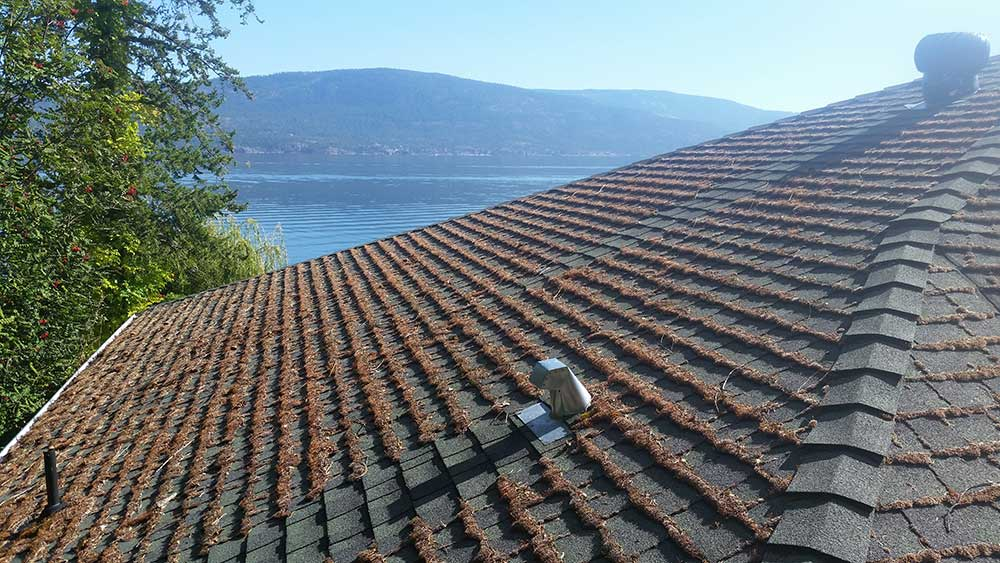 professional moss algae removal from roof shingles